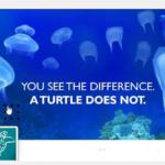 Confusion méduses et sacs plastiques