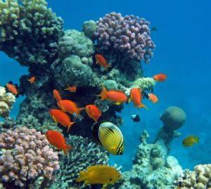 Corail vivant et poissons