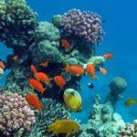 Terre 2 Verre - fonds-marins